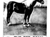 1965-05-wesh-red-pony